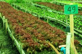 Agrilink 2016 to Highlight Potentials of Negros Island Region's Organic Agriculture